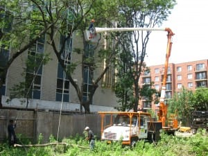 Queens Tree Service