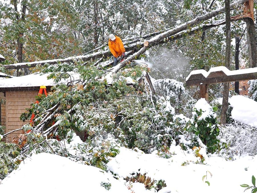 storm tree damage Queens