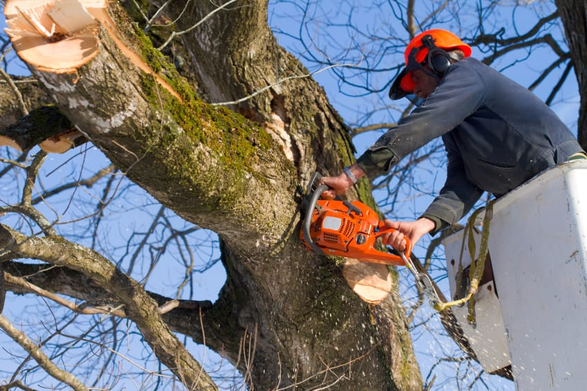 Image result for Tree Removal Company istock