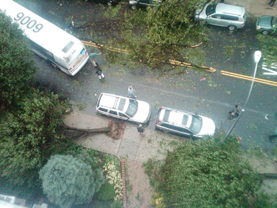 tree removal forest hills queens