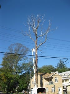 tree pruning queens