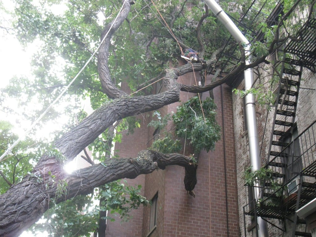 Queens, NY Tree Pruning