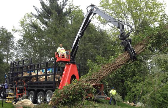 tree removal machine