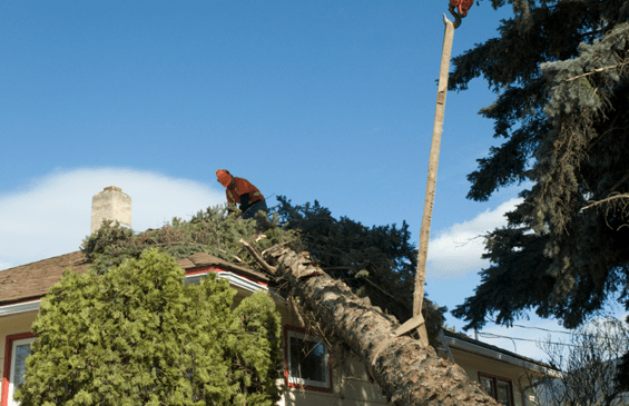 emergency tree removal in queens