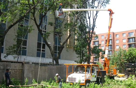tree trimming in queens