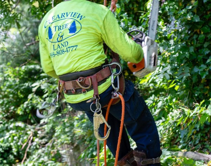 tree removal and climbing expert in queens ny