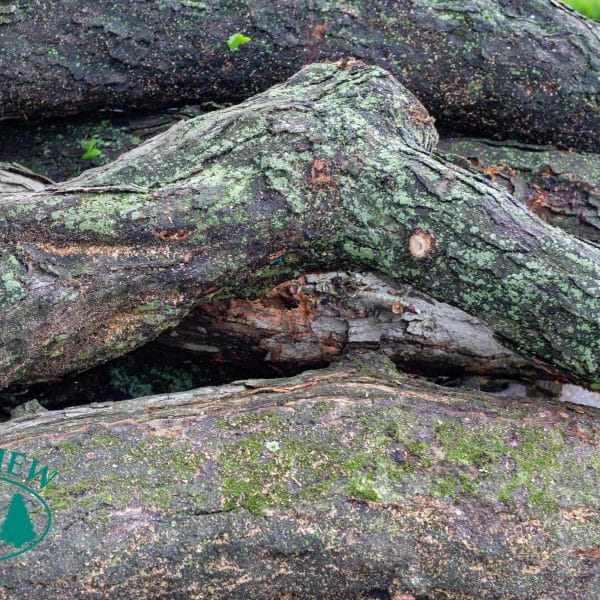 tree logs in queens ny